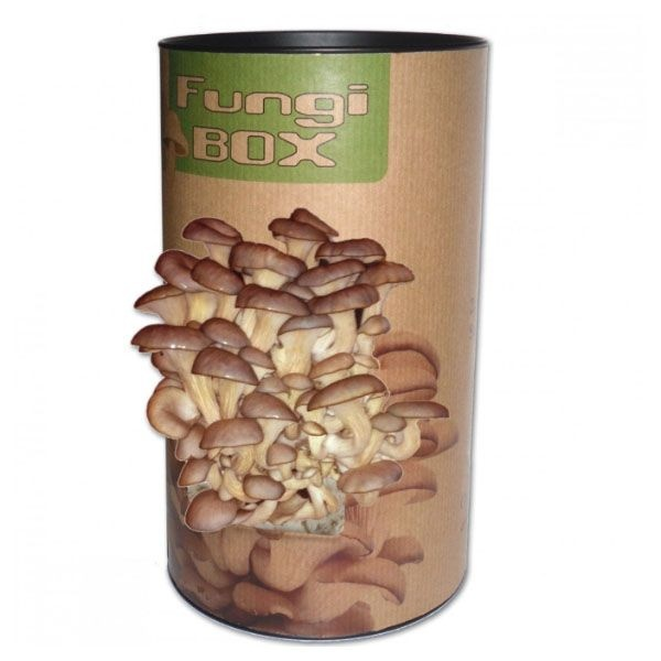Grow Your Own Oyster Mushrooms Kit